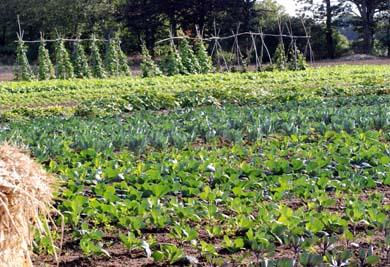 http://www.potager.fr/vers1/public/mot_du_jardinier